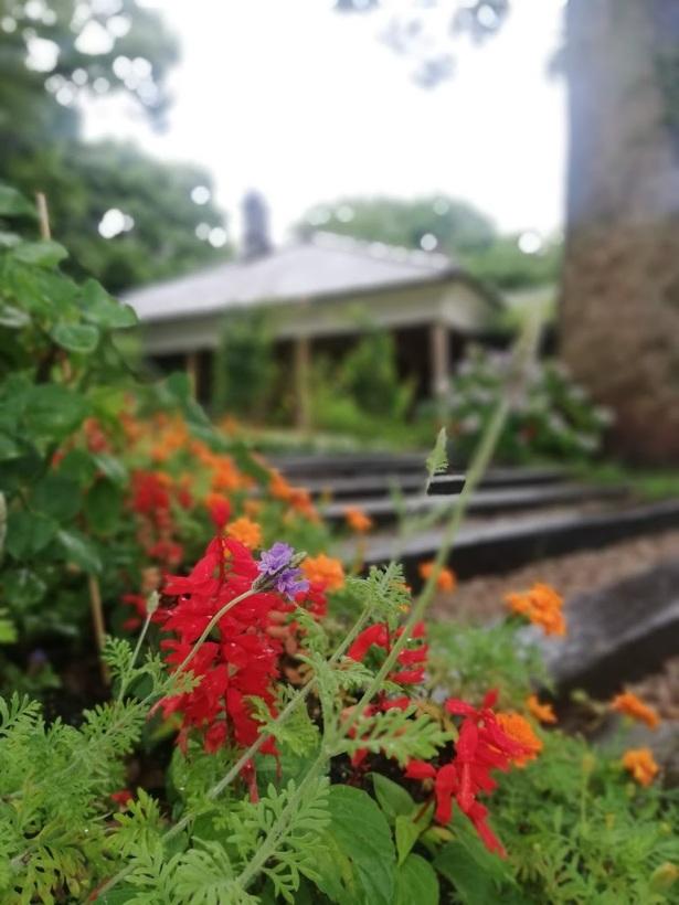 RADWELL FLOWER