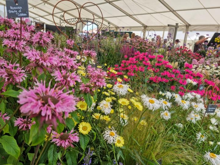 RHS Tatton Park FlowerShow
